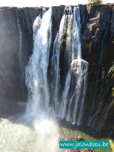 Zambie1.jpg