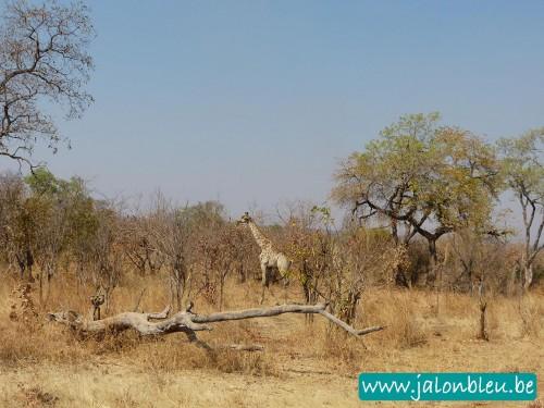 Zambie2.jpg