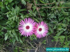 Carpe Fleurs.jpg