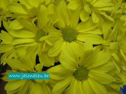 Fleurs jaunes Photos2013.jpg