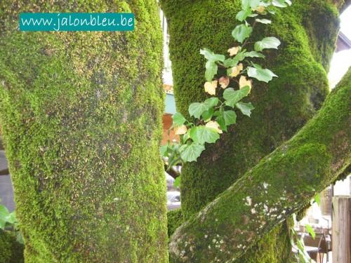arbre vert.jpg