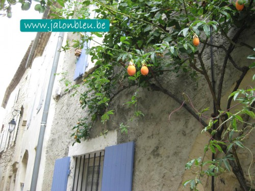 orange ppt.jpg
