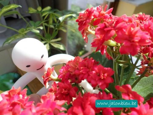 robot fleurs.jpg